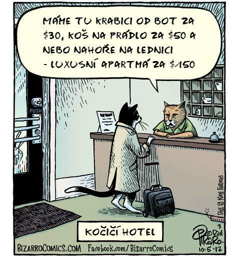 Malovaný vtip kočka na hotelu
