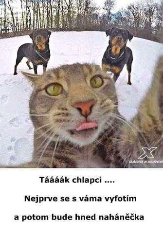 Vtip s mazanou kočkou