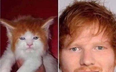 Cat Scheeran