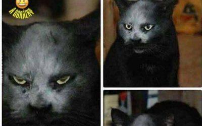 Kočka démon
