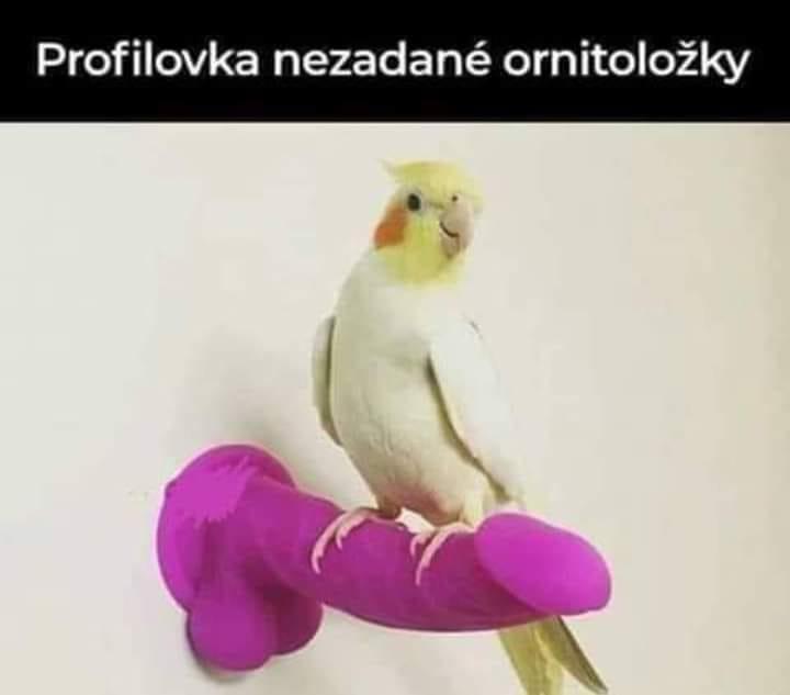 Profilovka ornitoložky