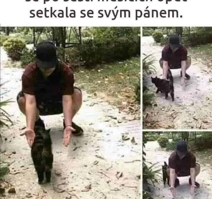 Dojemná reakce kočky